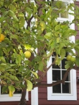 house-and-lemon-tree